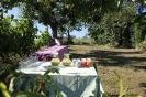 Pause im Seminargarten